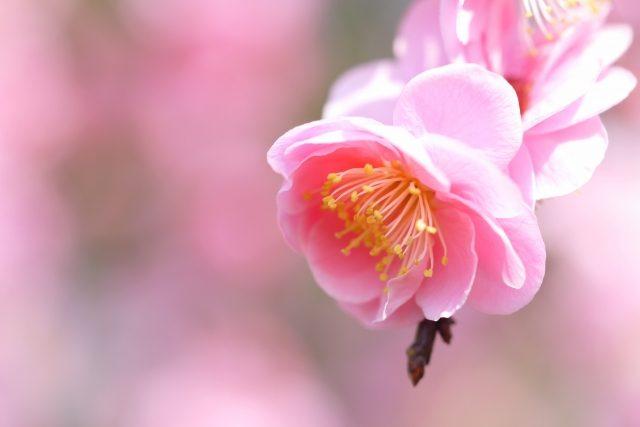 3月生募集中~神戸市灘区で着方を学ぶなら六甲教室へ✨~
